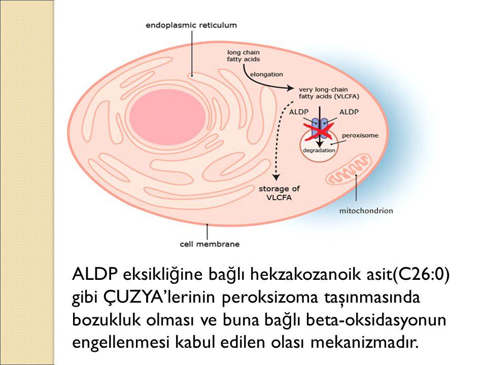 ALDP eksikliğine bağlı hekzakozanoik asit(C26:0) gibi ÇUZYA'lerinin peroksizoma taşınmasında bozukluk olması ve buna bağlı beta-oksidasyonun engellenmesi kabul edilen olası mekanizmadır.