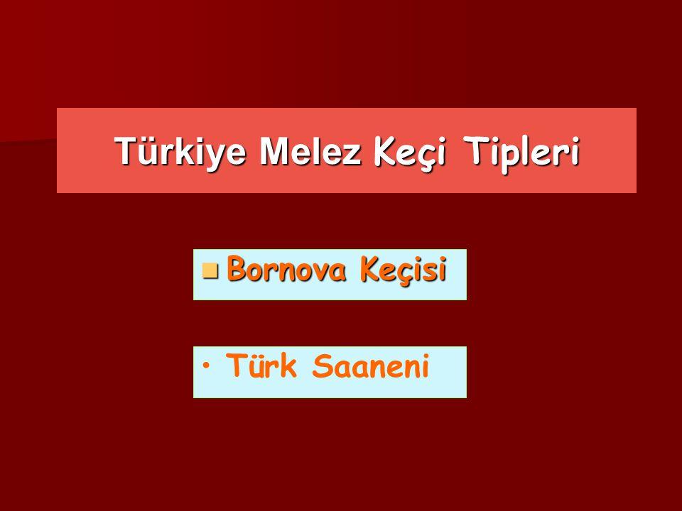 Türkiye Melez Keçi Tipleri