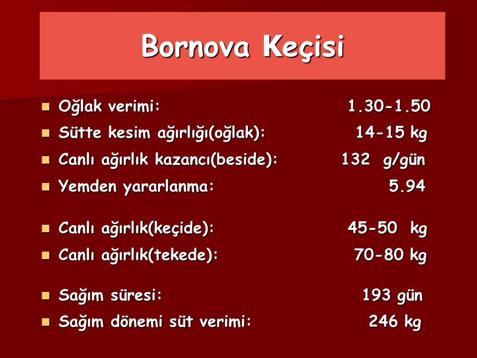 Bornova Keçisi Oğlak verimi: 1.30-1.50