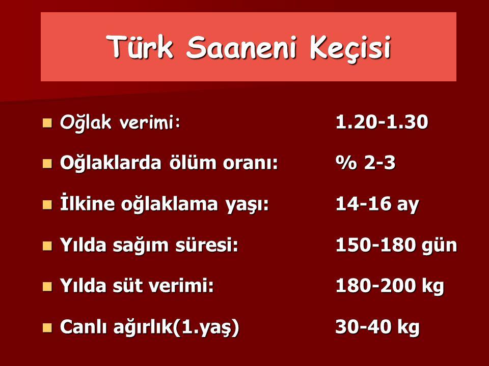 Türk Saaneni Keçisi Oğlak verimi: 1.20-1.30