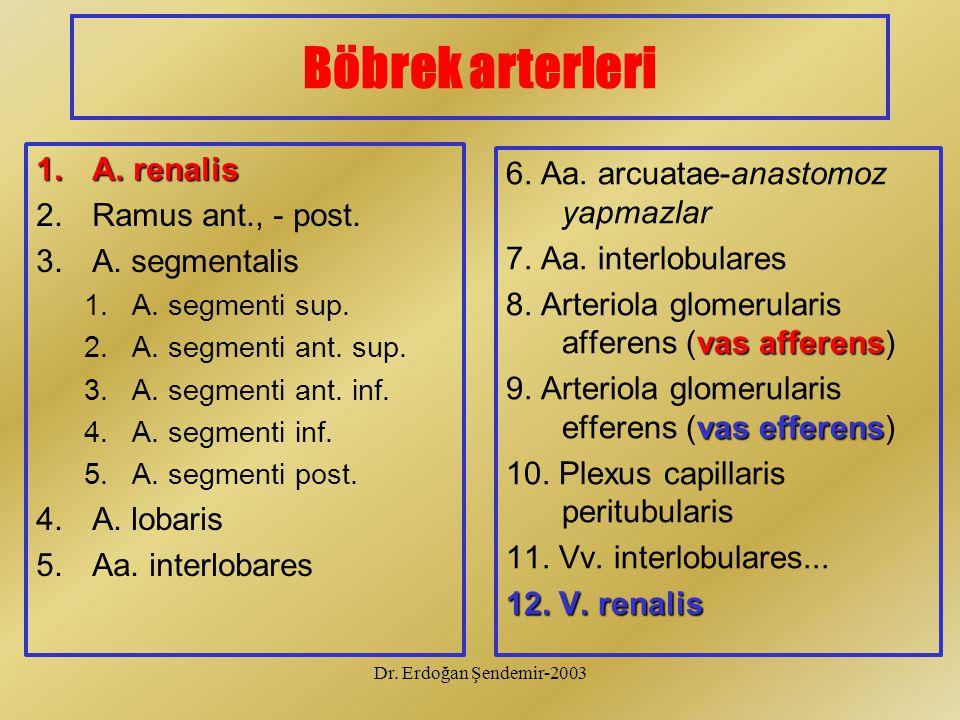 Böbrek arterleri A. renalis Ramus ant., - post. A. segmentalis
