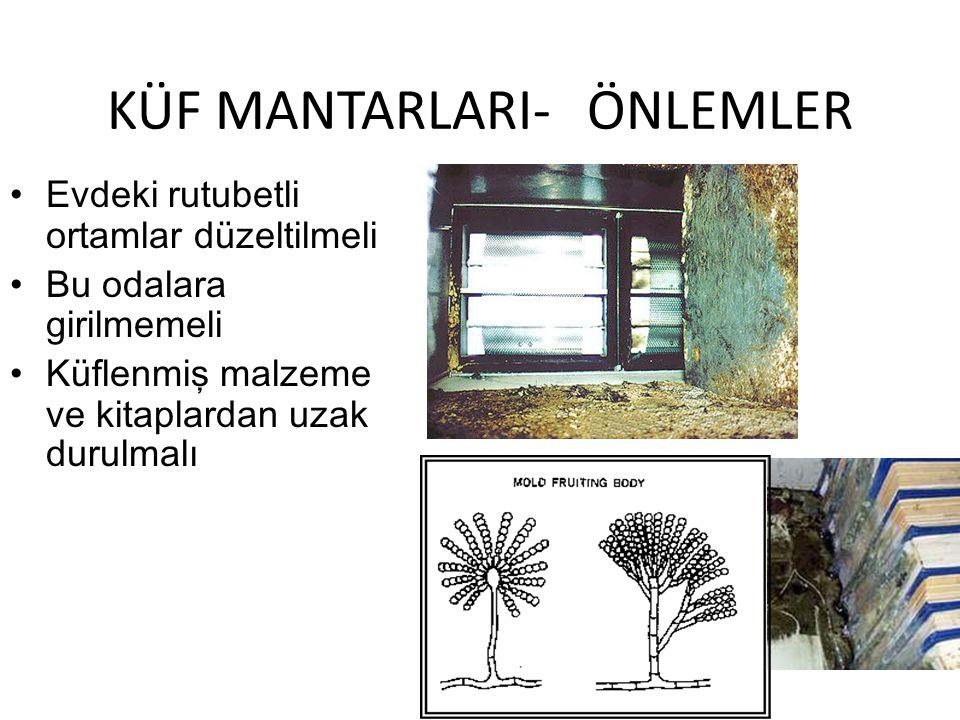 KÜF MANTARLARI- ÖNLEMLER
