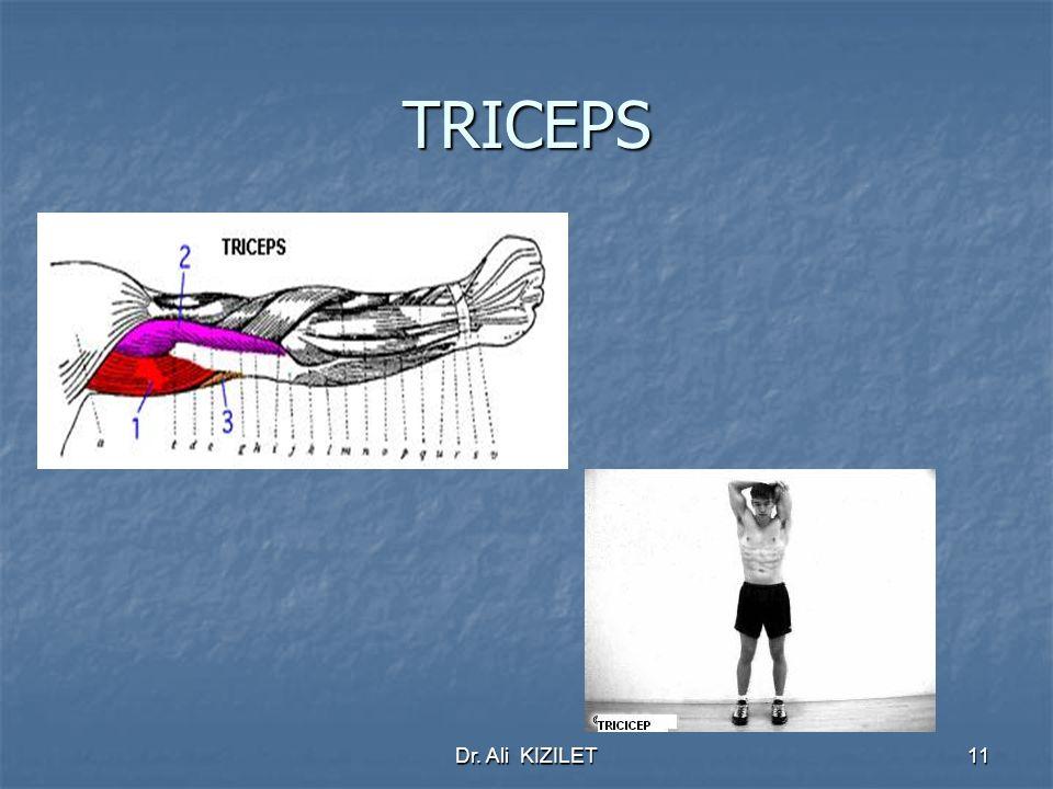 TRICEPS Dr. Ali KIZILET