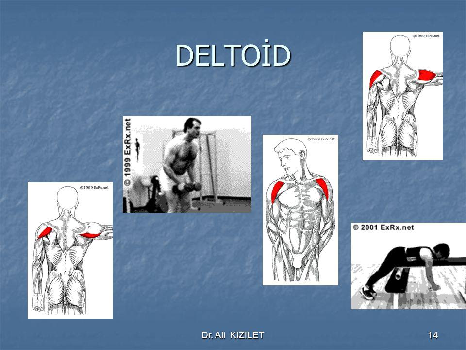 DELTOİD Dr. Ali KIZILET