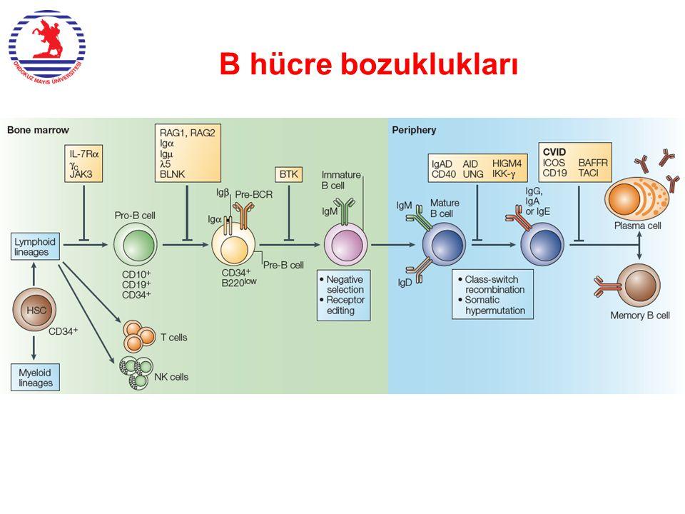 B hücre bozuklukları