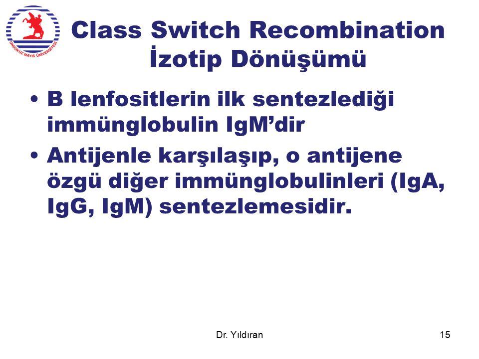 Class Switch Recombination İzotip Dönüşümü