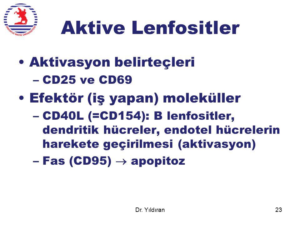 Aktive Lenfositler Aktivasyon belirteçleri
