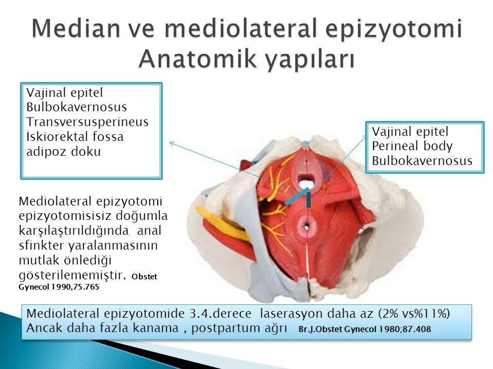 Median ve mediolateral epizyotomi Anatomik yapıları