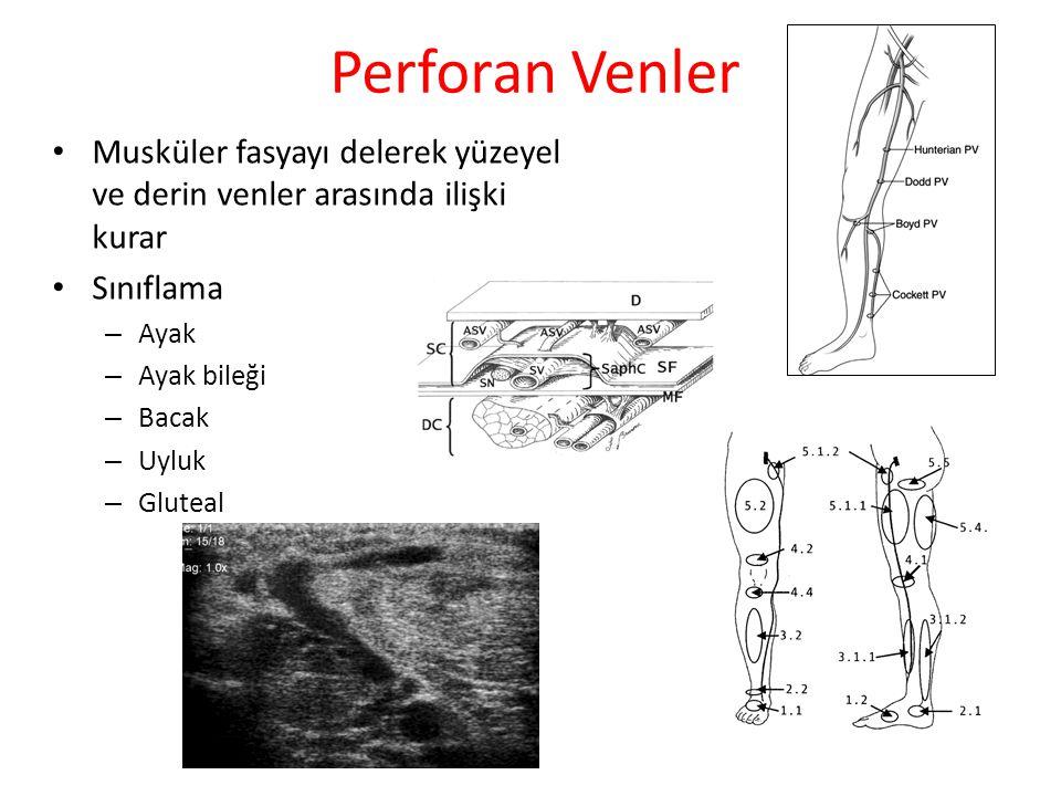 Perforan Venler Musküler fasyayı delerek yüzeyel ve derin venler arasında ilişki kurar. Sınıflama.