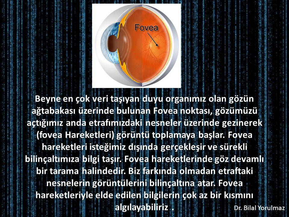Beyne en çok veri taşıyan duyu organımız olan gözün ağtabakası üzerinde bulunan Fovea noktası, gözümüzü açtığımız anda etrafımızdaki nesneler üzerinde gezinerek (fovea Hareketleri) görüntü toplamaya başlar.