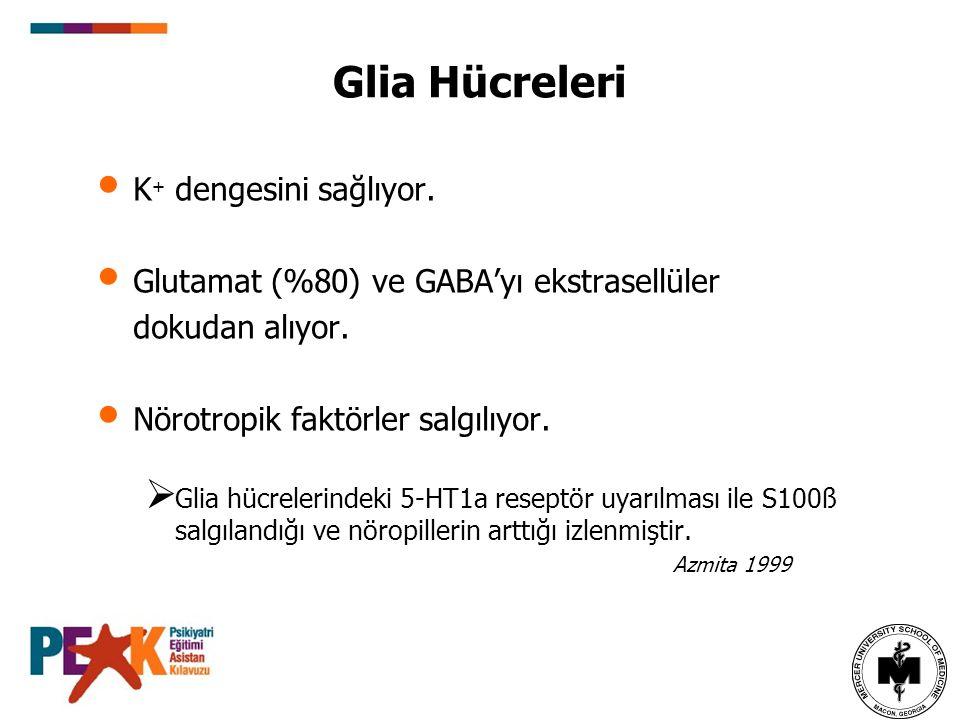 Glia Hücreleri K+ dengesini sağlıyor.
