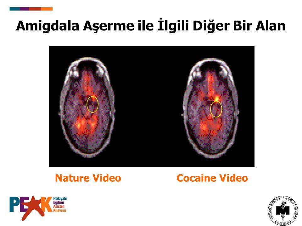Amigdala Aşerme ile İlgili Diğer Bir Alan