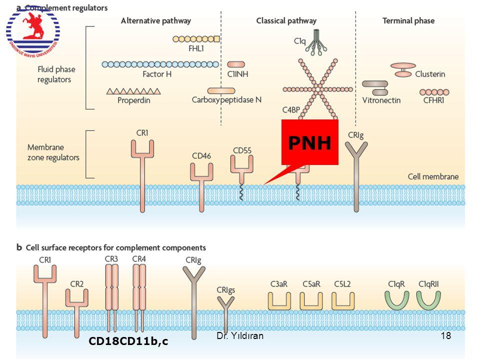 PNH Dr. Yıldıran CD18CD11b,c