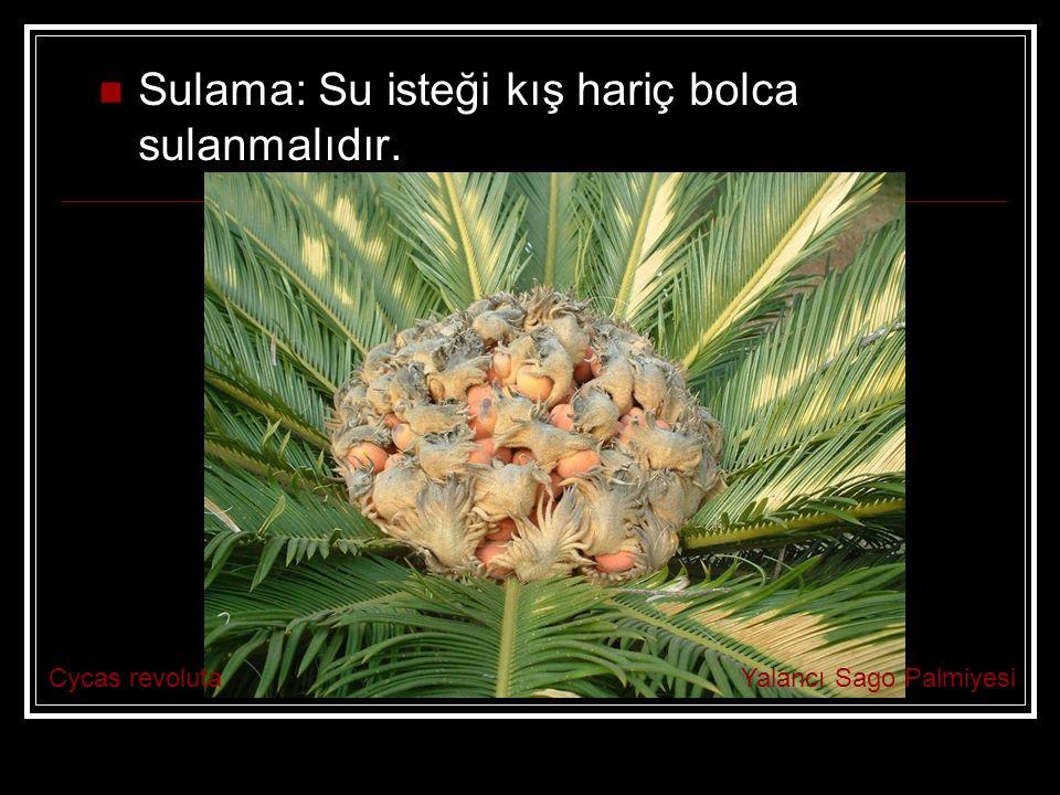 Sulama: Su isteği kış hariç bolca sulanmalıdır.