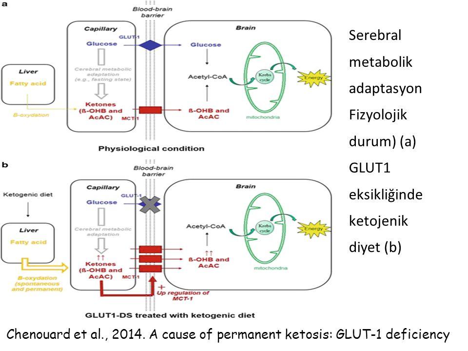 Serebral metabolik adaptasyon Fizyolojik durum) (a) GLUT1 eksikliğinde ketojenik diyet (b)