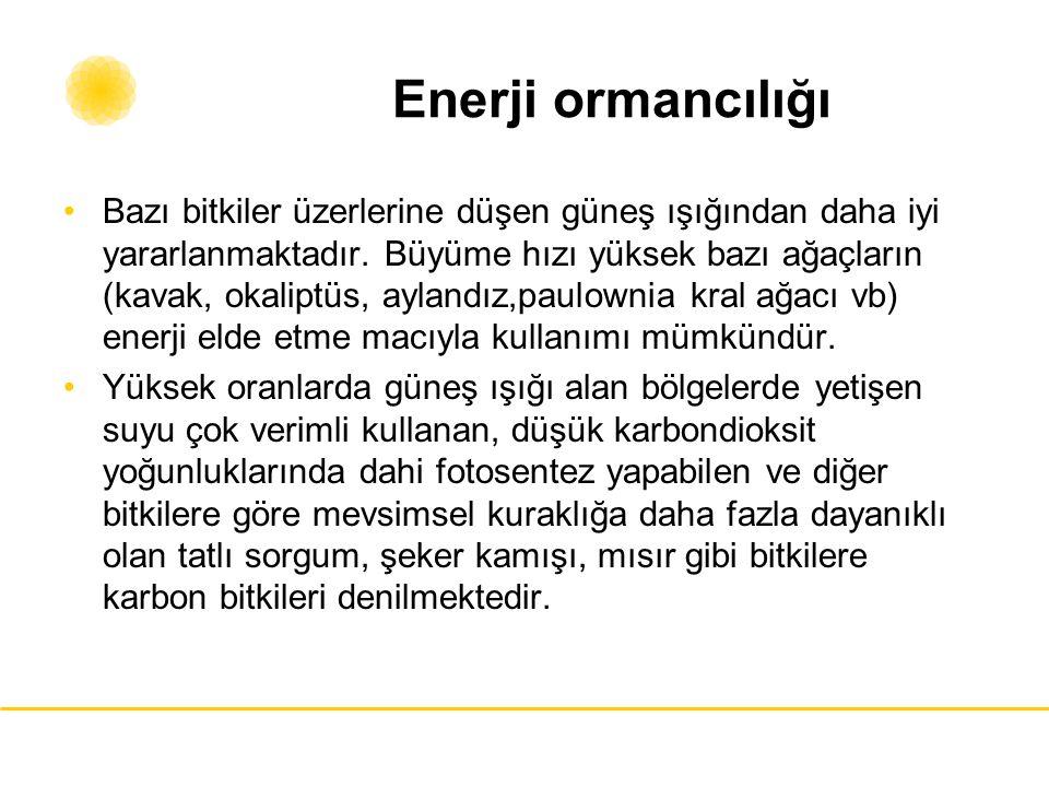 Enerji ormancılığı