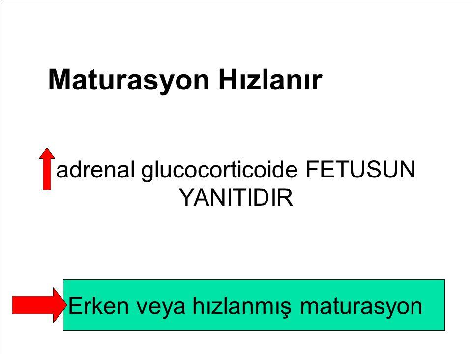adrenal glucocorticoide FETUSUN YANITIDIR