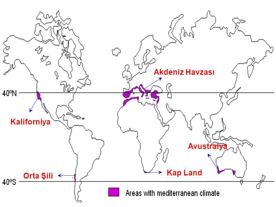 Akdeniz Havzası Kaliforniya Avustralya Kap Land Orta Şili