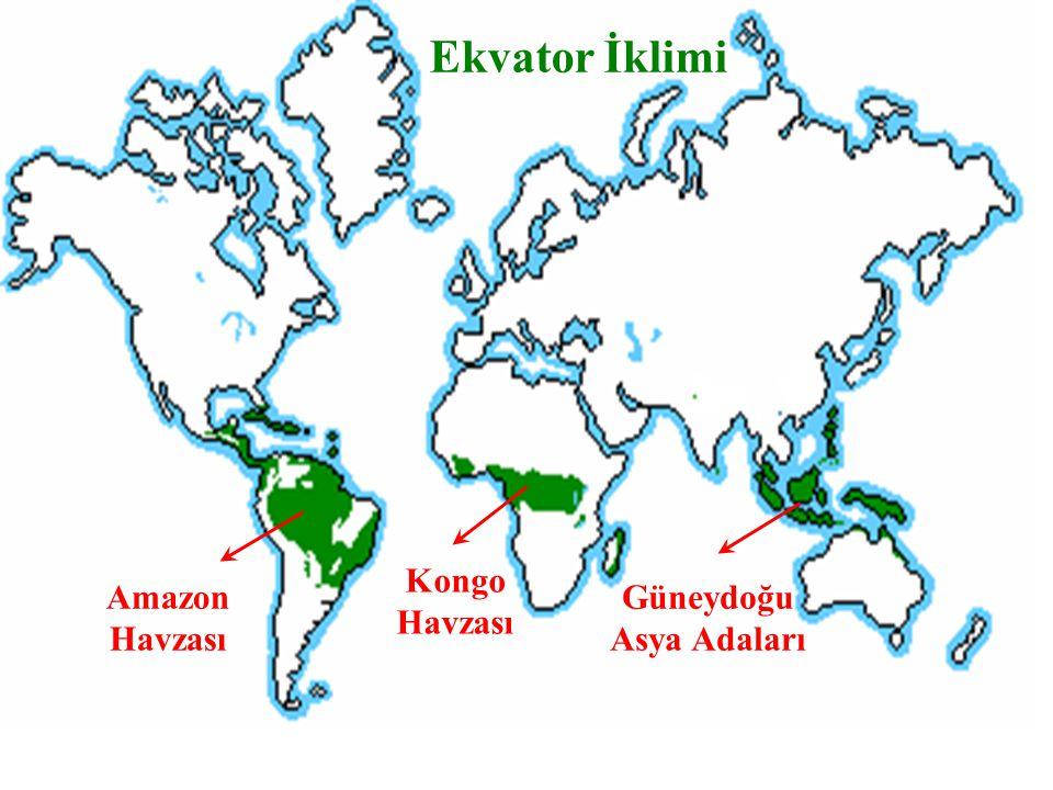 Ekvator İklimi Kongo Havzası Amazon Havzası Güneydoğu Asya Adaları