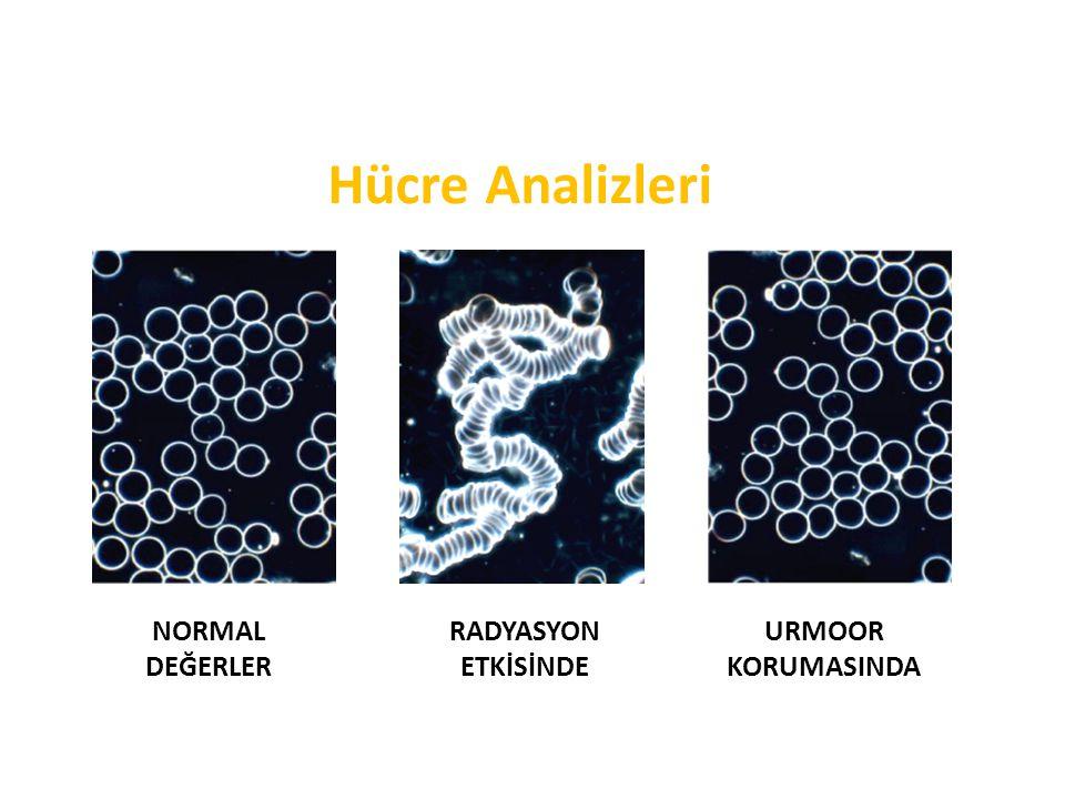 Hücre Analizleri NORMAL DEĞERLER RADYASYON ETKİSİNDE URMOOR