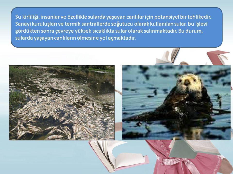 Su kirliliği, insanlar ve özellikle sularda yaşayan canlılar için potansiyel bir tehlikedir.