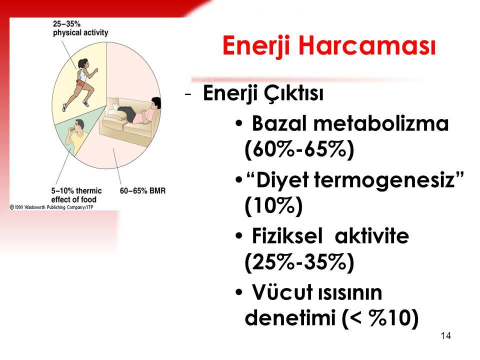 Enerji Harcaması Enerji Çıktısı Bazal metabolizma (60%-65%)