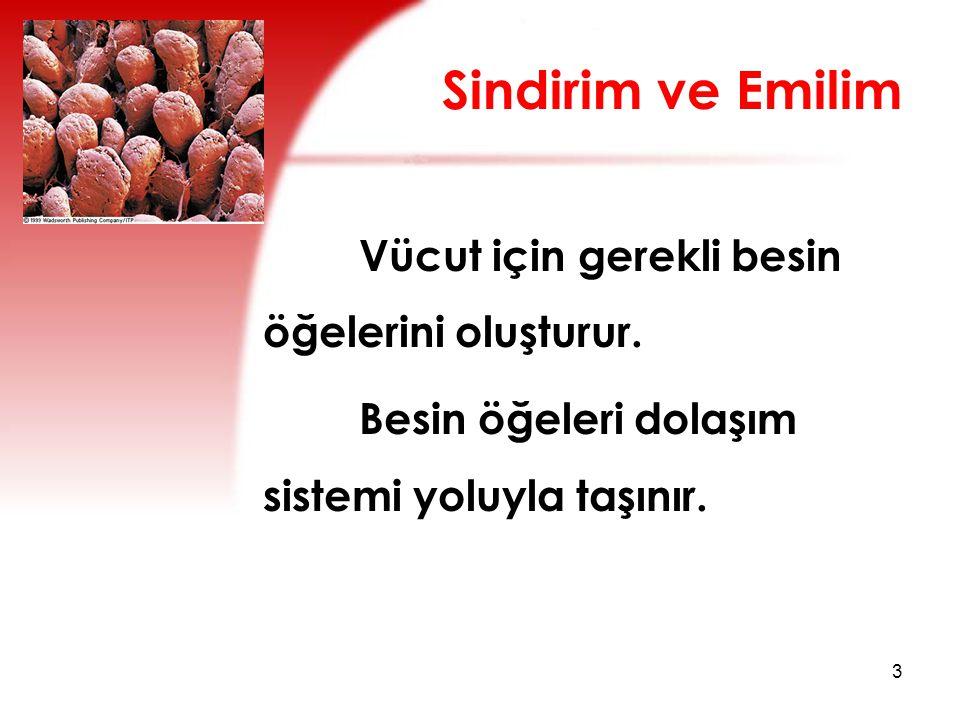 Sindirim ve Emilim Vücut için gerekli besin öğelerini oluşturur.