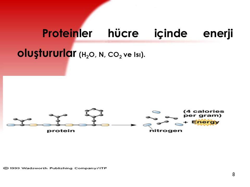 Proteinler hücre içinde enerji oluştururlar (H2O, N, CO2 ve Isı).