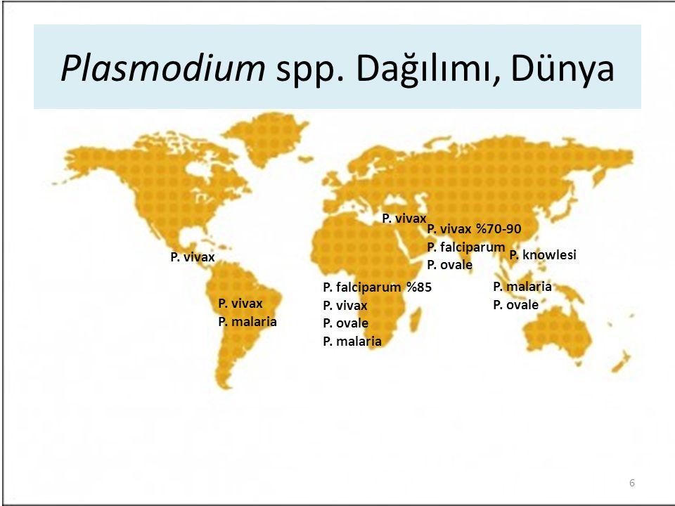Plasmodium spp. Dağılımı, Dünya