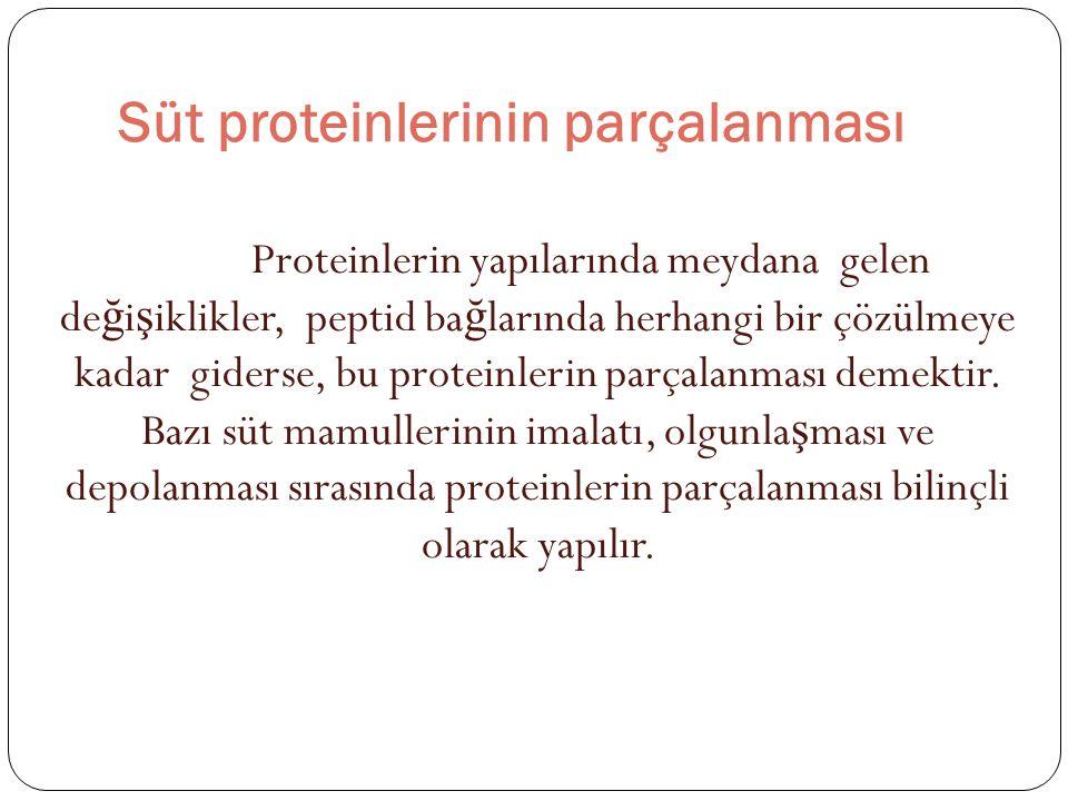 Süt proteinlerinin parçalanması