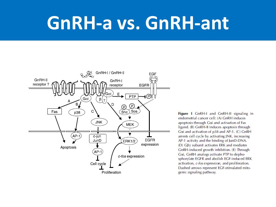 GnRH-a vs. GnRH-ant