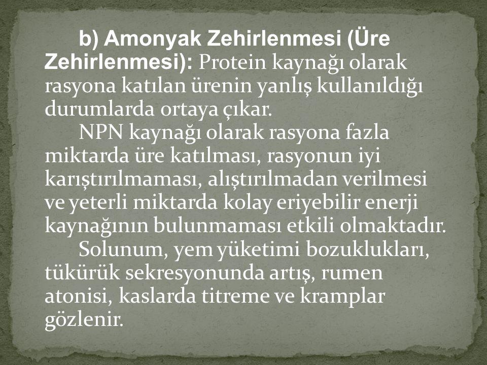 b) Amonyak Zehirlenmesi (Üre Zehirlenmesi): Protein kaynağı olarak rasyona katılan ürenin yanlış kullanıldığı durumlarda ortaya çıkar. NPN kaynağı olarak rasyona fazla miktarda üre katılması, rasyonun iyi karıştırılmaması, alıştırılmadan verilmesi ve yeterli miktarda kolay eriyebilir enerji kaynağının bulunmaması etkili olmaktadır.
