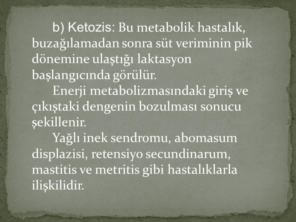 b) Ketozis: Bu metabolik hastalık, buzağılamadan sonra süt veriminin pik dönemine ulaştığı laktasyon başlangıcında görülür. Enerji metabolizmasındaki giriş ve çıkıştaki dengenin bozulması sonucu şekillenir.
