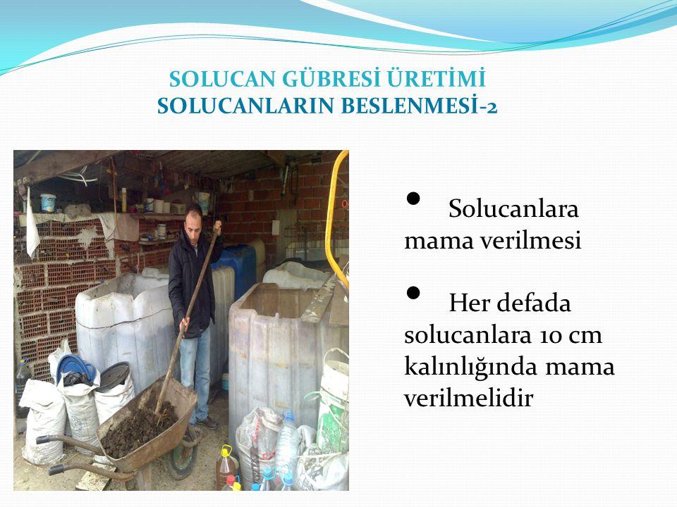 SOLUCAN GÜBRESİ ÜRETİMİ SOLUCANLARIN BESLENMESİ-2