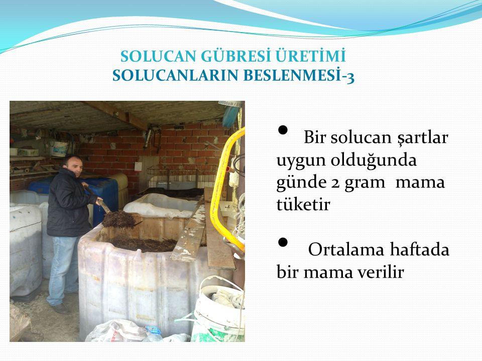 SOLUCAN GÜBRESİ ÜRETİMİ SOLUCANLARIN BESLENMESİ-3