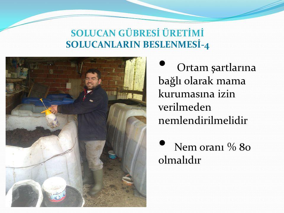 SOLUCAN GÜBRESİ ÜRETİMİ SOLUCANLARIN BESLENMESİ-4