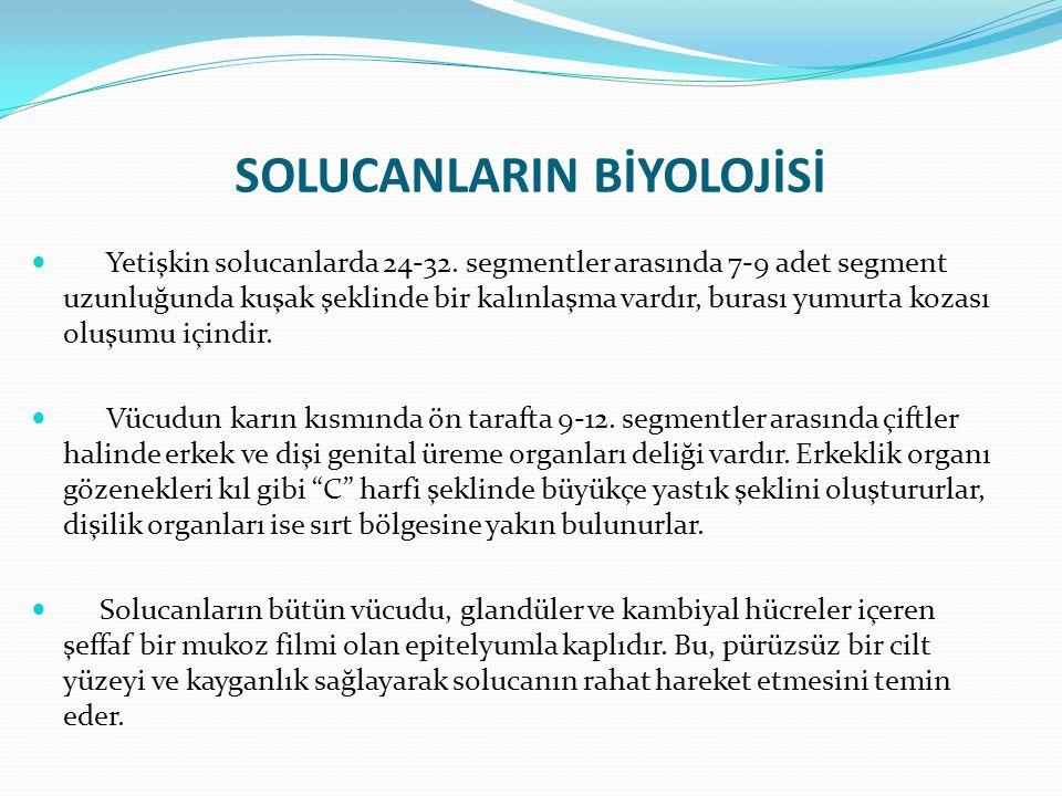 SOLUCANLARIN BİYOLOJİSİ