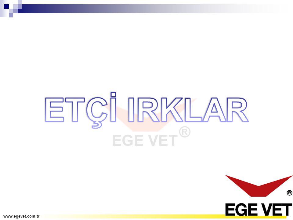 ETÇİ IRKLAR www.egevet.com.tr