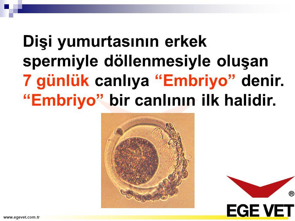 Dişi yumurtasının erkek spermiyle döllenmesiyle oluşan 7 günlük canlıya Embriyo denir. Embriyo bir canlının ilk halidir.
