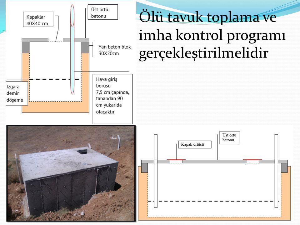 Ölü tavuk toplama ve imha kontrol programı gerçekleştirilmelidir