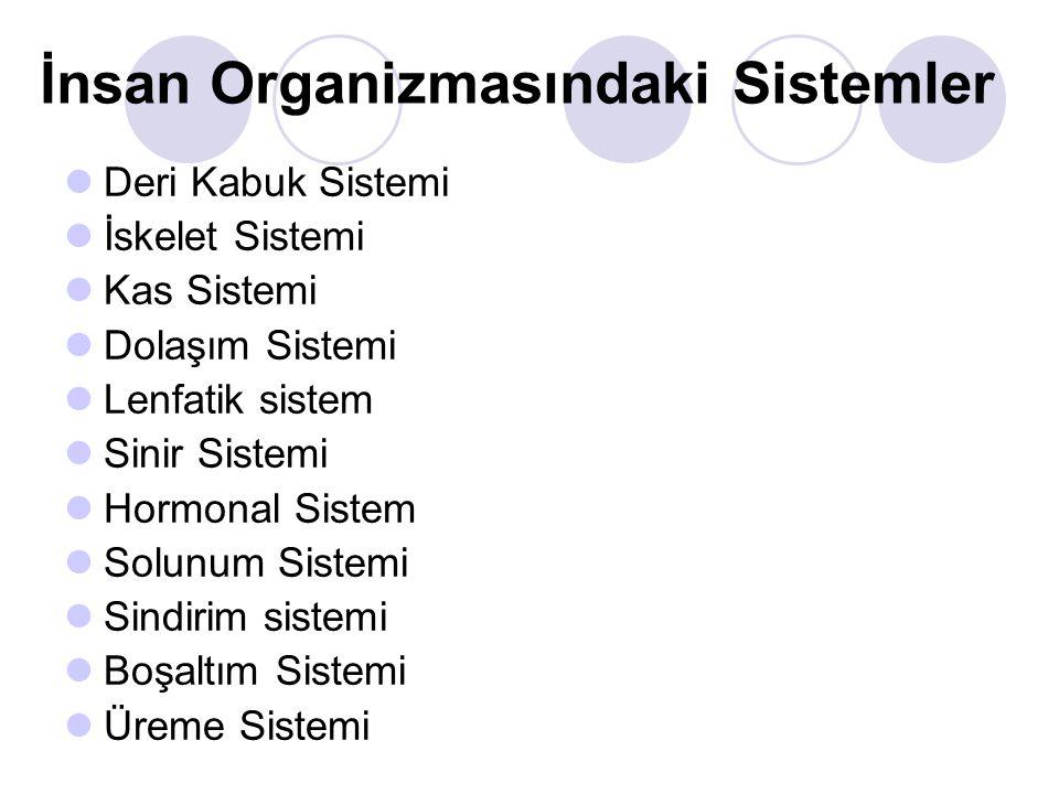 İnsan Organizmasındaki Sistemler