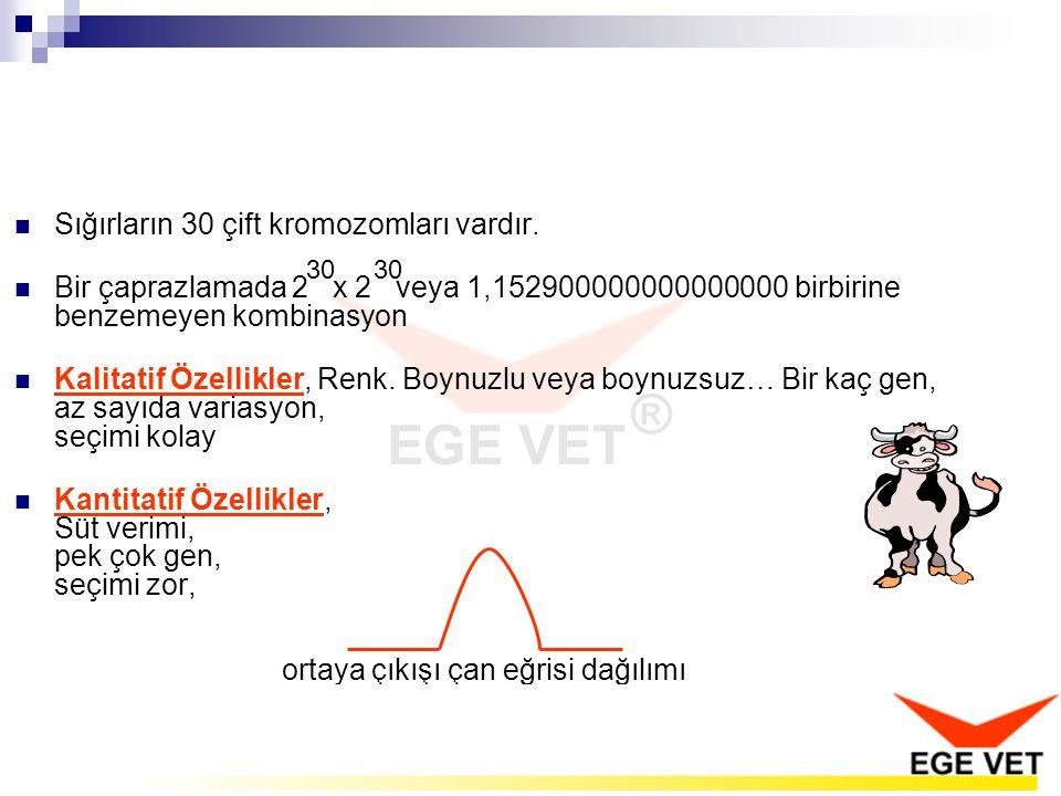 Sığırların 30 çift kromozomları vardır.