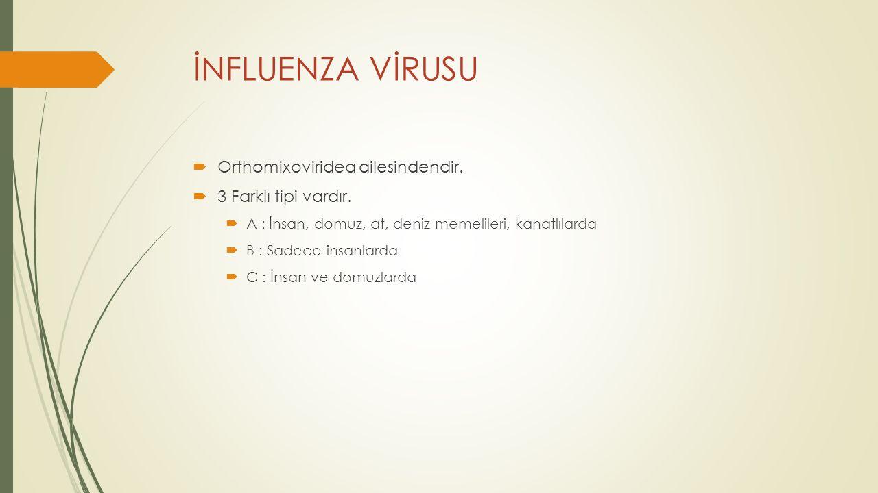 İNFLUENZA VİRUSU Orthomixoviridea ailesindendir. 3 Farklı tipi vardır.