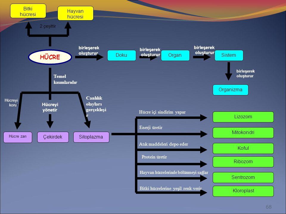 HÜCRE Bitki hücresi Hayvan hücresi Doku Organ Sistem