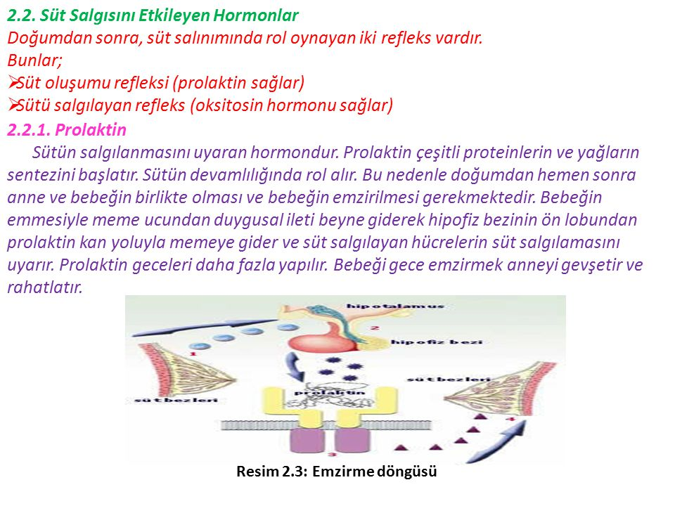 2.2. Süt Salgısını Etkileyen Hormonlar