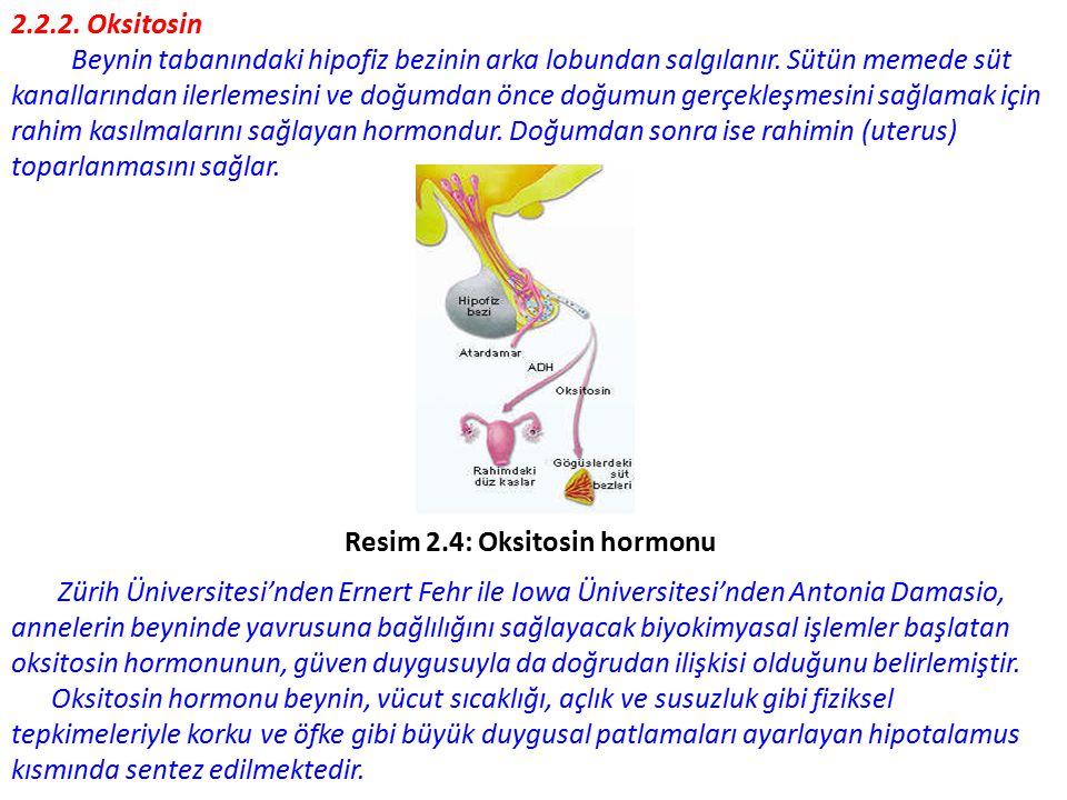 2.2.2. Oksitosin Beynin tabanındaki hipofiz bezinin arka lobundan salgılanır. Sütün memede süt.