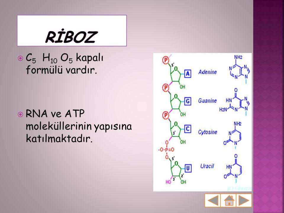 RİBOZ C5 H10 O5 kapalı formülü vardır.