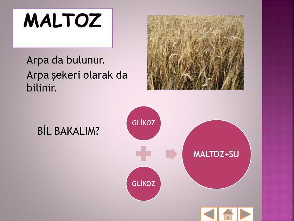 MALTOZ Arpa da bulunur. Arpa şekeri olarak da bilinir. BİL BAKALIM