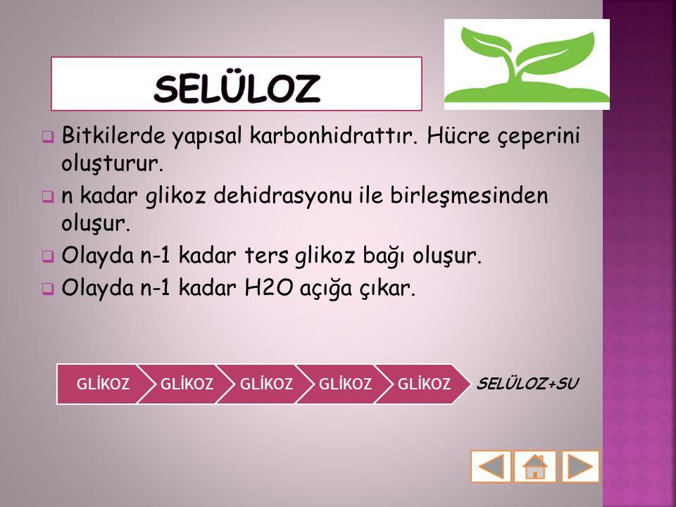 Selüloz Bitkilerde yapısal karbonhidrattır. Hücre çeperini oluşturur. n kadar glikoz dehidrasyonu ile birleşmesinden oluşur.