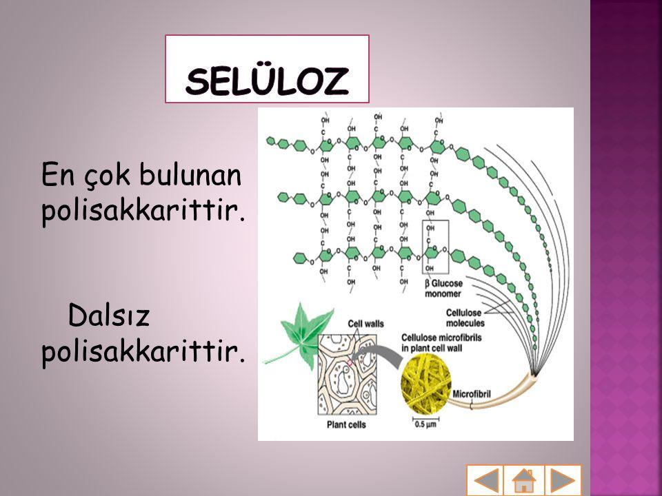 Selüloz En çok bulunan polisakkarittir. Dalsız polisakkarittir.
